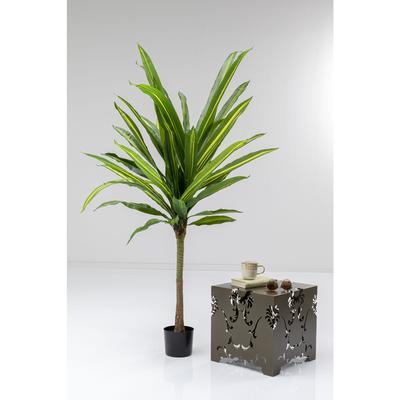 Planta deco Dracaena Fragrans 180cm