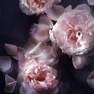 Nina Ricci L'extase Caresse de Rose Women EDP 50 ML