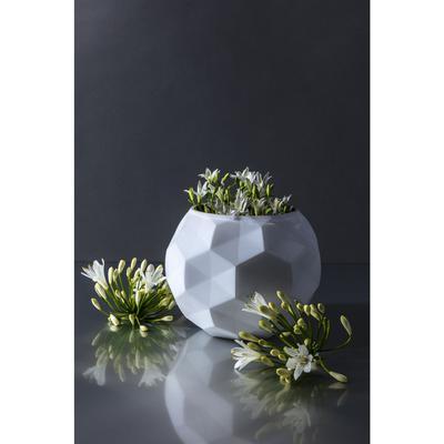 Vasija Precious blanco 14cm