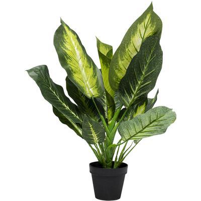 Planta decorativa Dieffenbachia 50cm