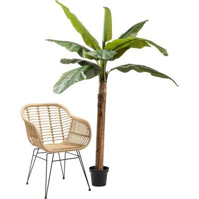 Planta decorativa Banana Tree 190cm