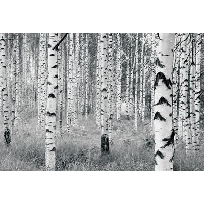 Vlies Fototapete Woods