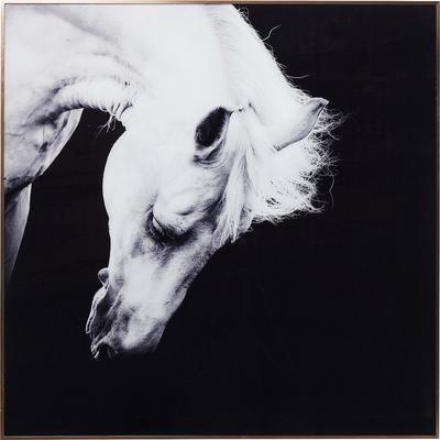 Cuadro Alu Proud Horse 100x100cm
