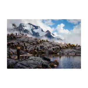 Set de 5 obras en papel Fine Art de 35cm x40cmfirmadas por el artista