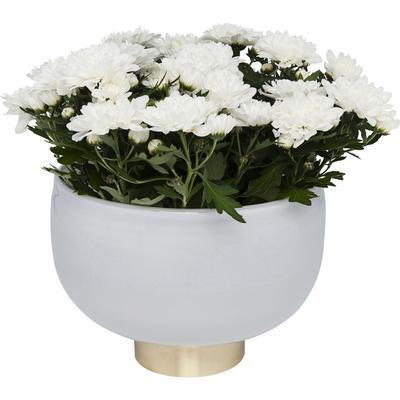 Vasija Pure blanco Bowl 17cm