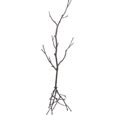 Perchero pie Tree Branch 183cm