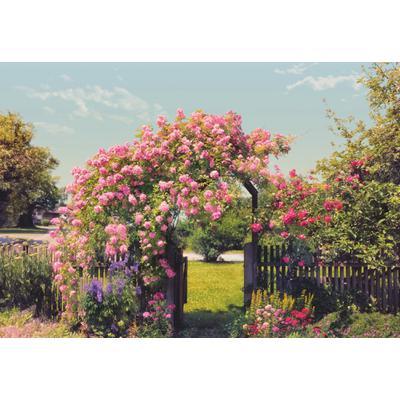 Fototapete Rose Garden